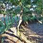 東山の空堀と土塁
