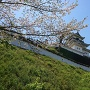 復元天守に名残りの桜