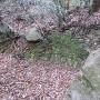 搦手側登城路にある石積み