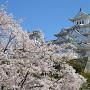 天守と桜春の共演