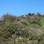 春日山城(登城道から)