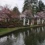 本丸跡(舞鶴橋から)