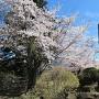 城址碑と桜