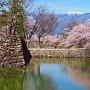 桜とアルプス