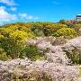 春の小牧山
