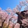 桜と太鼓櫓