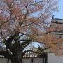 おとめ桜と御三階櫓