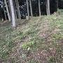 伝 金田屋敷跡の土塁