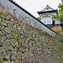 天守と本丸石垣・土塀(南東側)