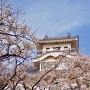 桜と天守①