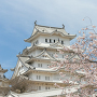 桜に染まる姫路城