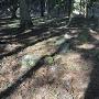 千畳敷跡に残る当時の礎石
