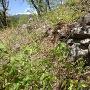本郭周辺の石塁