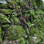ホオズキ段の石垣