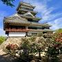 赤牡丹と松本城