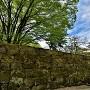本丸石垣と天守