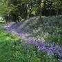 土塁と空堀(春)