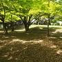 吉原山城 二の丸跡