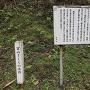 富山さくらの名所 松倉城跡