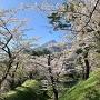 桜に主役を奪われる磐梯山と横堀。