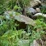 登城道斜面に見える石