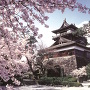 丸岡城と桜[提供:一般社団法人坂井市観光連盟]