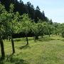 果樹園(西曲輪南側の下)