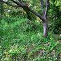 善福寺曲輪の土塁と復元逆茂木