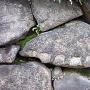 矢穴(堀川の石垣)