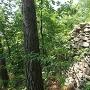 本郭の石垣