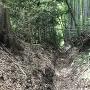 多賀神社北側の外堀底から西方を望む