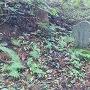 本庄清七郎の墓碑