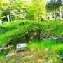 居館跡石垣