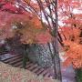 裏鉄門の紅葉