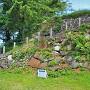 本丸石垣(南側)