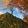 紅葉の石垣参道