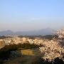 桜と米子城[提供:米子市教育委員会]