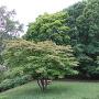桜チャシ城址風景(北側から)