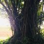 門番の様な大樹