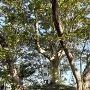 平島館跡(横から)