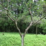 結城宗広公没後650年祭記念植樹の木