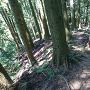 林道からの登城道