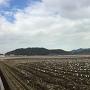 農道に見る山