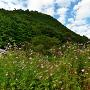 コスモスと城山