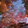 犬山城の空