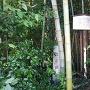 石碑は、竹藪の中だが、撮りやすい場所