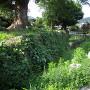 草が生えている石垣