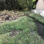 堀跡と思われる蓮池