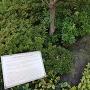 上杉弾正屋敷跡から出土した庭石
