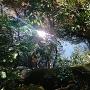 水堀(真上から)